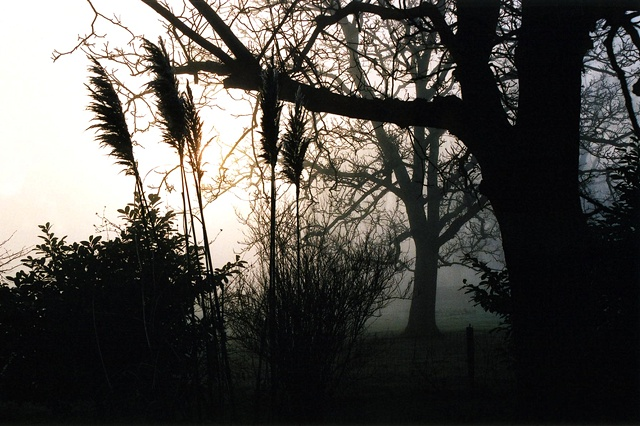 Trees in Mist#2