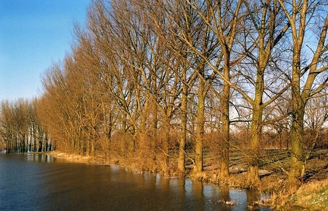 Rhine River #5