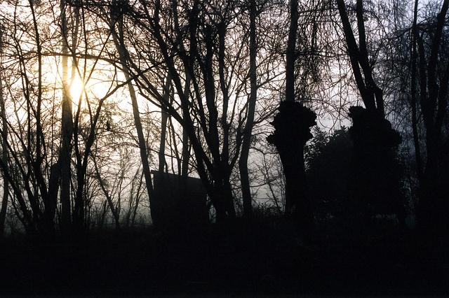 Trees in Mist #3