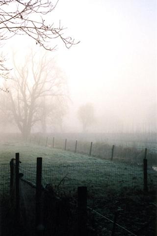 Trees in Mist #10