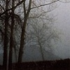Trees in Mist #6