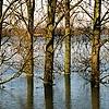 Rhine River #7