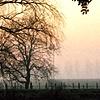 Trees in Mist #11