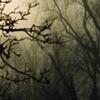 Trees in Mist #9