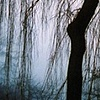 Trees in Mist #7