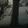 Trees in Mist#2