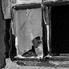 Alcatraz #10