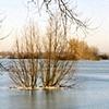 Rhine River #3