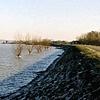 Rhine River #2
