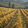 """""""Mountain Vineyard"""""""