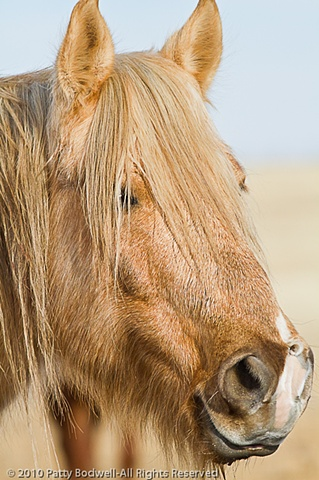 Chewy is a Navajo Pony adoped through the Santa Fe Horse Shelter in 2007