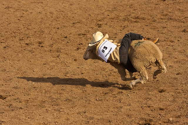 muttin bustin rodeo sheep rider