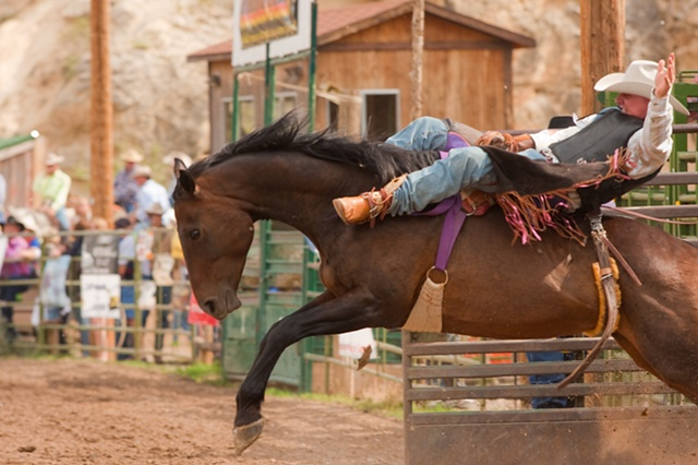 bronc rider riding out of the gate rodeo dubois wyoming