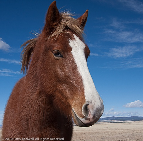 Redbo is a mustang adopted through the BLM last year.