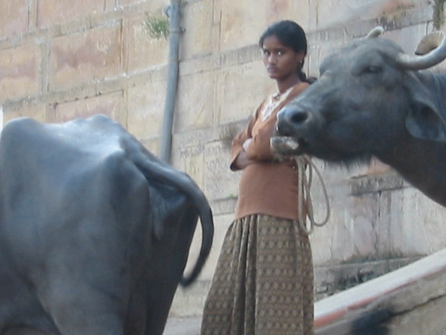 Girl and Ox