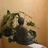 Buddha hallway in Sebastopol, California