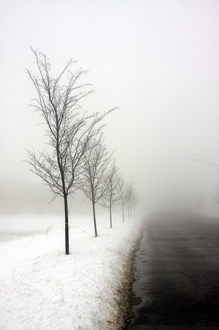 7 trees in the fog