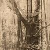 "Banyan Tree-3 of 3 scrolls entitled ""Fundamentals of Thai Life""."