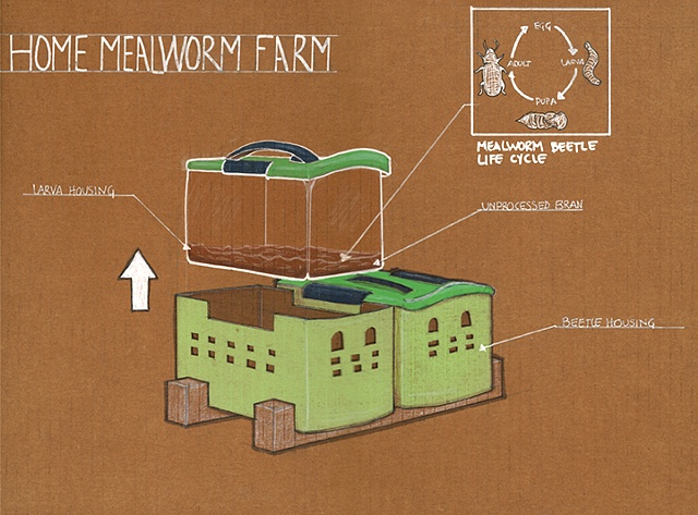 Mealworm Farm Drawing