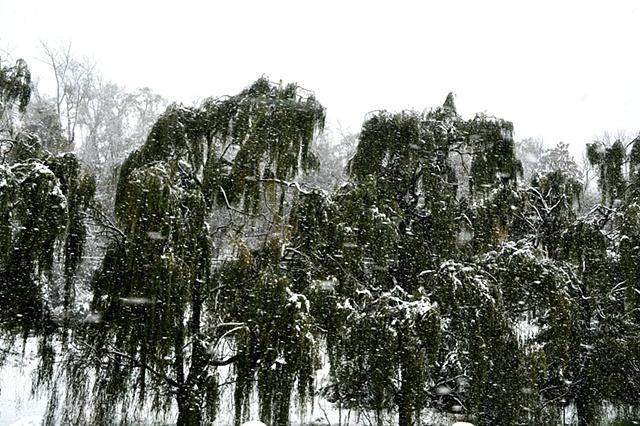Roadin' Series: Upstate NY Snowstorm