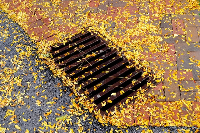 Fall Grate After Rain - PA