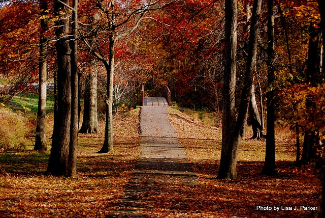 Fall Path - Centreville, VA