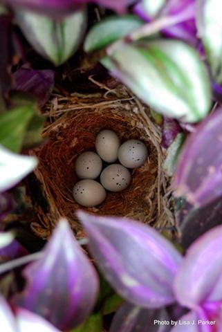 Birds in the Nest - Amelia, VA