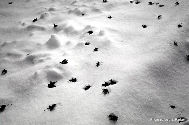 Leaves on Snow - Warrenton, VA