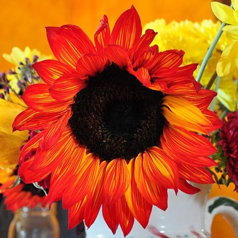 Flowers - Ithaca, NY