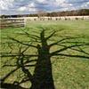 Tree Shadow - Bull Run Battlefield, VA