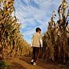 Corn Maze - Chesterfield, VA