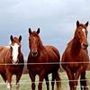 Horses - Farmville, VA