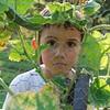 In the Garden - Amelia, VA