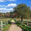 Gravel Road to Pond - Massachusetts