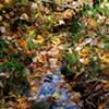 Fall Creek - Centreville, VA