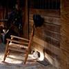 Barn Cat in Shaft of Sunlight - Farmville, VA