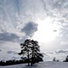 Trees On Hill After Snow - Manassas, VA