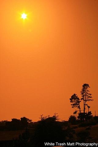Sunset Trees
