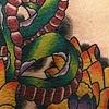 Snake Lotus