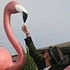 Smoking Flamingo