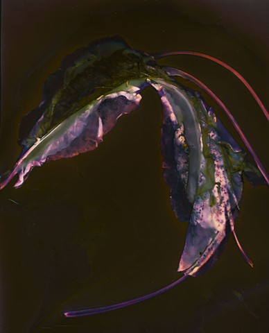 Earth Ruminations: Specimen II