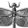 CMNH, Libellula luctuosa (Widow Skimmer)