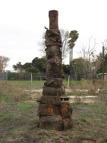 Seth Pringle Reconstructed Palm Tree
