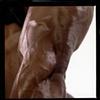 The Bodybuilder Series