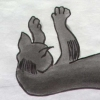 Birdcat sleeping