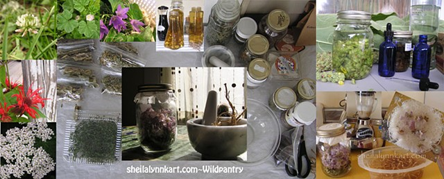 wild pantry, wild medicine, herbal remedies, wellness, pain management,