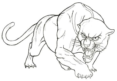 panther drawing outline - photo #9