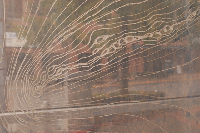 Detail of wax on silk (seen from inside the exhibit space)