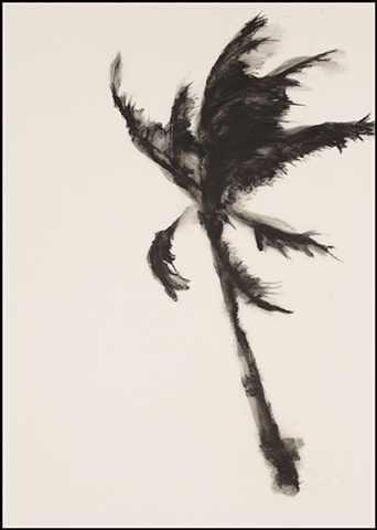 Storm Palm No. 8