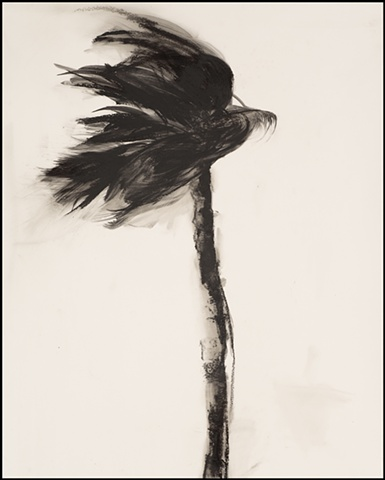Storm Palm No. 11